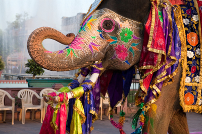 Image 14 Days Golden Triangle Holiday Tour with Best of Rajasthan