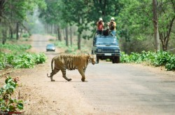 Golden Triangle Ranthambhore Image